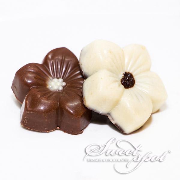 Chocolats dégustation